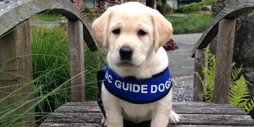 Fleet fans in guide-dogs fundraiser